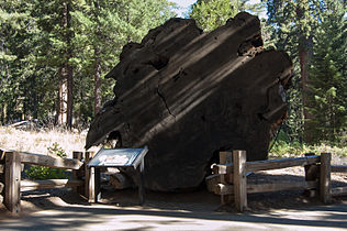United States - California - Sequoia National Park - 16.jpg