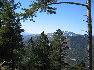 Unterberg (Lower Austria) - Coniferous forest on the Gaisberg. Right rear: the Unterberg (with ski slopes). Left: the Rax-Schneeberg Group