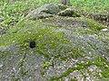 Velnio akmuo (Kupiškis) .jpg