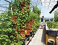 Vertical Tower Aquaponic System.jpg
