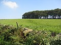 View across field towards copse above Milnhay Farm - geograph.org.uk - 968005.jpg
