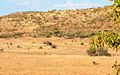 View to east with Wildebeest - panoramio.jpg