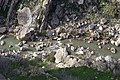 Views around the river, mountains, cemetery, and Ottoman-era fort at Dwin 23.jpg