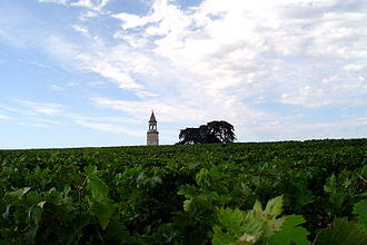 History of French wine - During the Middle Ages, the Medoc region was a marshy plain more suitable for growing corn than grape vines. The skill of Dutch engineers was put to use in draining the marshes, making the region suitable for planting grape varieties like Cabernet Sauvignon and Merlot.