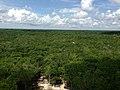 Vista desde la pirámide Cobá, Quintana Roo.jpg