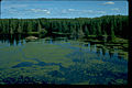 Voyageurs National Park VOYA9525.jpg