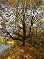Vranovice - Stromořadí lip malolistých I.jpg