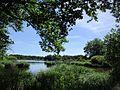Vue de l'étang Bouteiller à Bélâbre.jpg