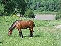 Vyazovenka - Horse - 03.jpg