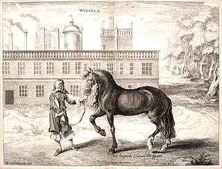 Iberian horse