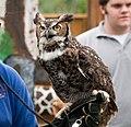 WR - Great Horned Owl 10 (5761920674).jpg