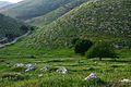 Wadee Hadee - panoramio.jpg