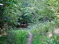 Waldweg - panoramio (45).jpg