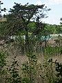Waldweg von der Blauen Gumpe zum großen Ostersee,.jpg