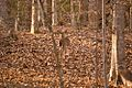 Watcher in the woods - panoramio.jpg