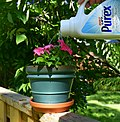 Watering jug make from empty container.jpg