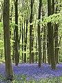 West Woods - geograph.org.uk - 419365.jpg