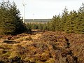 Whitelee Forest - geograph.org.uk - 1085721.jpg