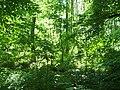 Wielkopolski Park Narodowy latem2.jpg