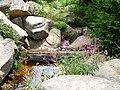 Wildblumen.JPG
