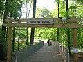 Wisent-Wald Bern.jpg