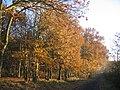 Woodland at Burlish Top - geograph.org.uk - 227215.jpg