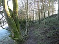 Woods near Lord's Stone - geograph.org.uk - 691436.jpg