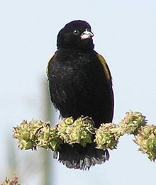 Yellow Bishop-1.jpg