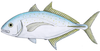 Yellowspotted trevally.png