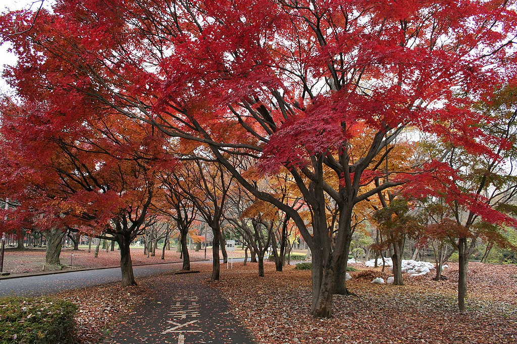 Yoyogi Koen in autumn