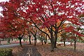 Yoyogi Koen in autumn.jpg