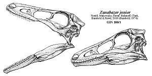 Zanabazar (dinosaur) - Reconstructed skull by Jaime Headden