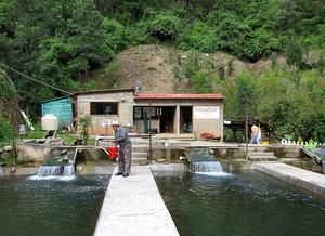 """Zapotec """"Shoo-Bettoo"""" fish farm near..."""