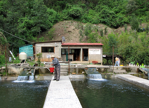 Zapotec fish farm in Ixtlan Oaxaca.png