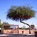 Zen bus stop.jpg