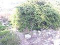 Zurrieq, Malta - panoramio (145).jpg