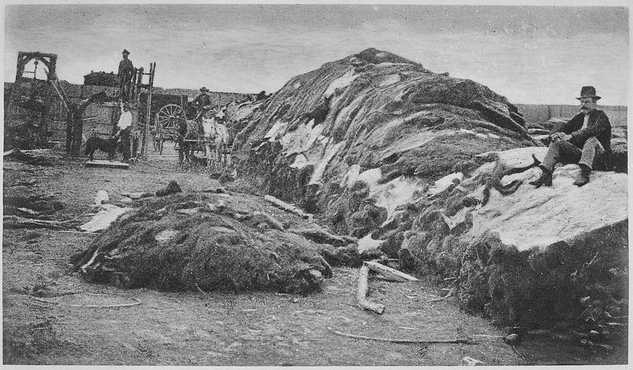 File Quot Rath Amp Wright S Buffalo Hide Yard In 1878 Showing
