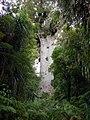 """""""Tane Mahuta"""" (Maori) - Lord of the Forest.jpg"""