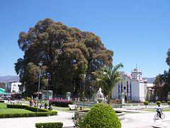 Árbol-del-Tule-Oaxaca-Mexico.jpg