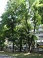 Академски парк у Београду, споменик природе, 008.JPG