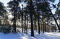 Барсова гора - panoramio.jpg