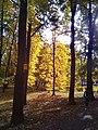 В городском парке (Рязань).jpg
