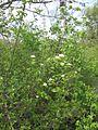 Дендрологічний парк 272.jpg