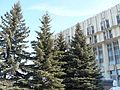 Ели у белого дома (Fur-trees near white house) - panoramio.jpg