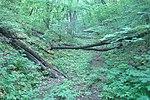 Лісові мости.jpg