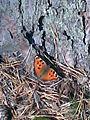 Метелик гріє крильця.jpg