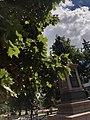 Пам'ятник І.;Г.;Харитоненку — меценату, ,пл. Покровська, сквер ім. І;Г.;Харитоненка.jpg