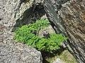 Расщелина - panoramio.jpg