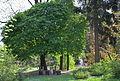 Сирецький дендропарк 10.jpg