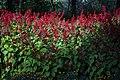 عکس از گلها و گیاهان باغ بوتانیکال تفلیس - گرجستان 03.jpg
